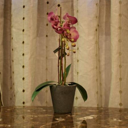 Orchidej, Sia